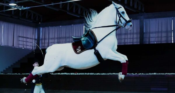 Life Lessons from Slovenia's Lipizzaner Stallions