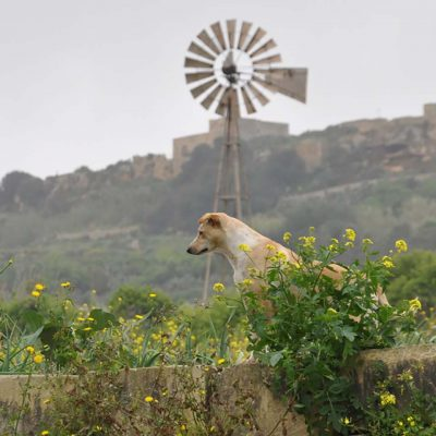 An Odyssey Through the Ages on the Maltese Island of Gozo