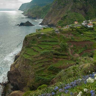 The Flower Power of Madeira