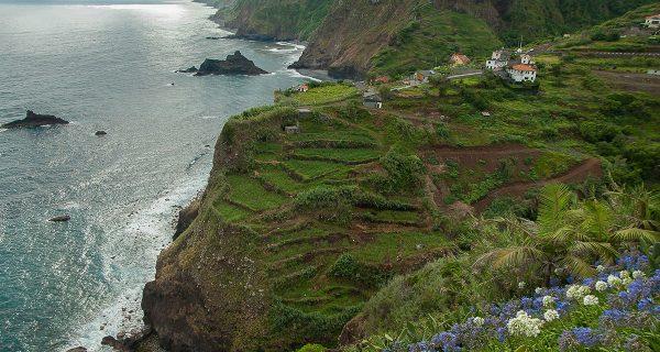 The Flower Power of Madeira