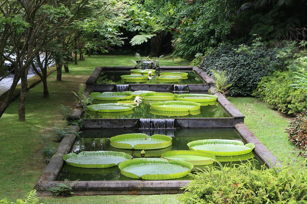 Azores Islands | Giant lily pads in pools at Terra Nostra Gardens