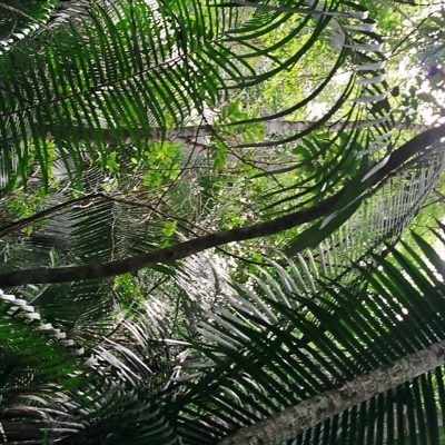 Life's Diversity & Inter-Connectedness Affirmed in Belize