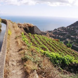 Madeira Levadas: 15th Century Waterways are Walkers Paradise