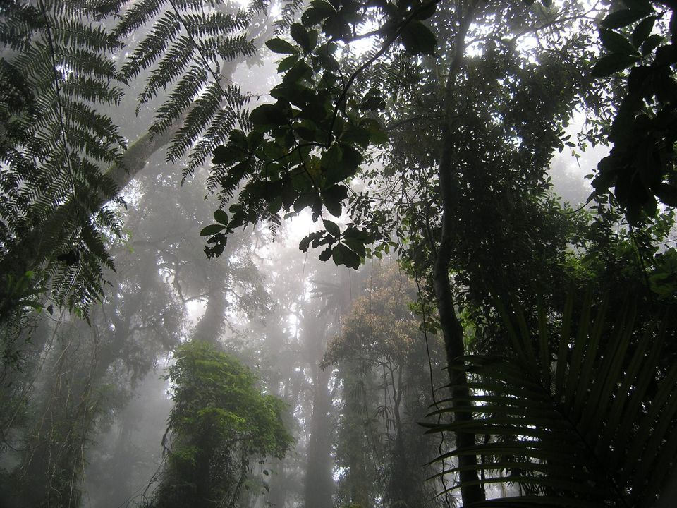 Coomera Circuit in the mist inspires a sense of connection with Nature. Photo: Binna Burra Lodge